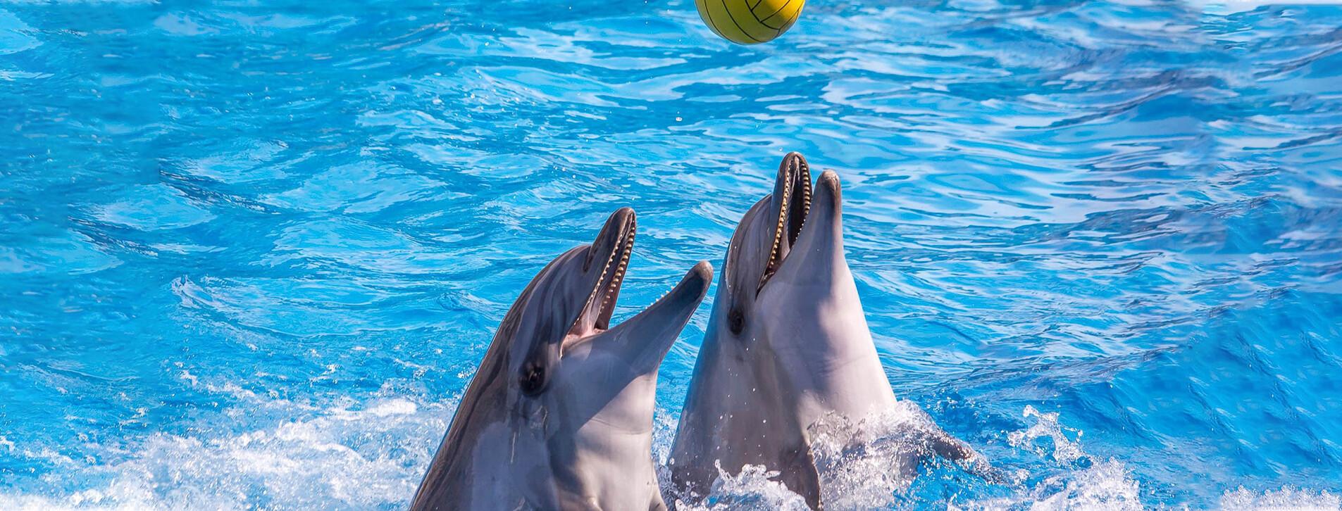 Fotoğraf - Dolphinarium Gösterisi