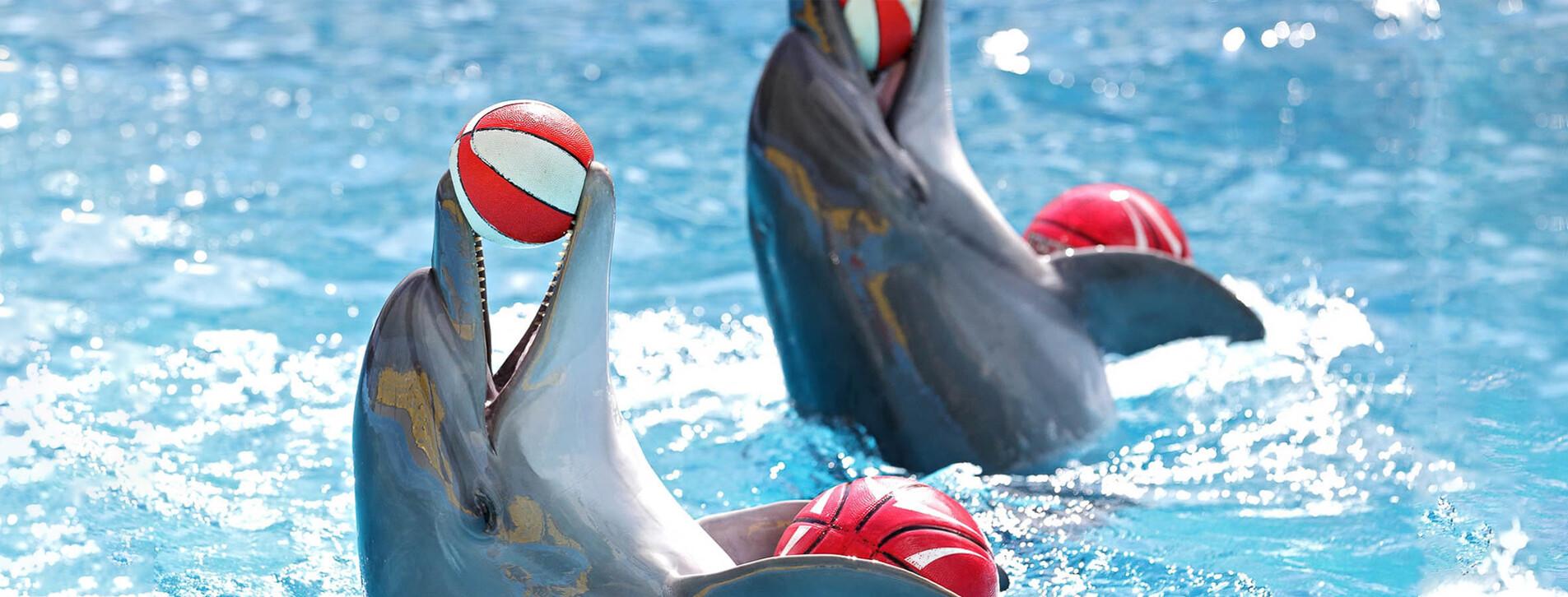 Fotoğraf - Aile için Dolphinarium Gösterisi